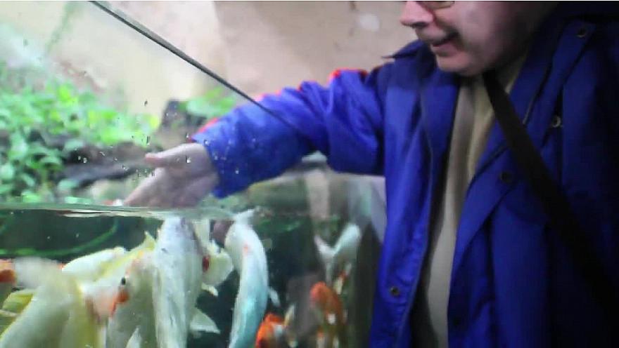 En visite à L'aquarium de LIMOGES